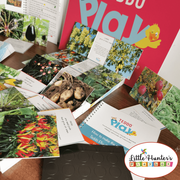 Where Our Food Grows [Lesser-Known Facts Edition] (Set Of 40 Learning Cards) Teddo Play