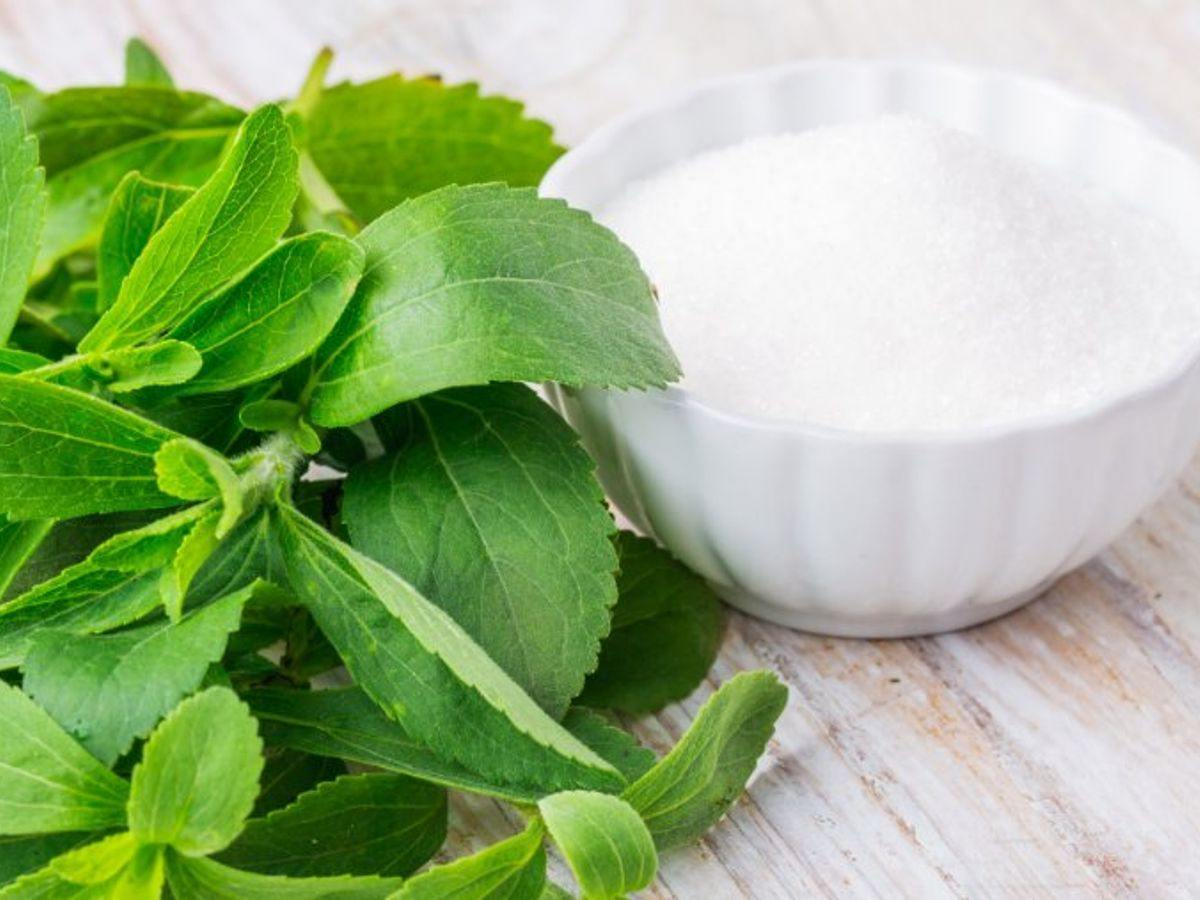 Is Stevia Safe for Diabetes? - Magicleaf