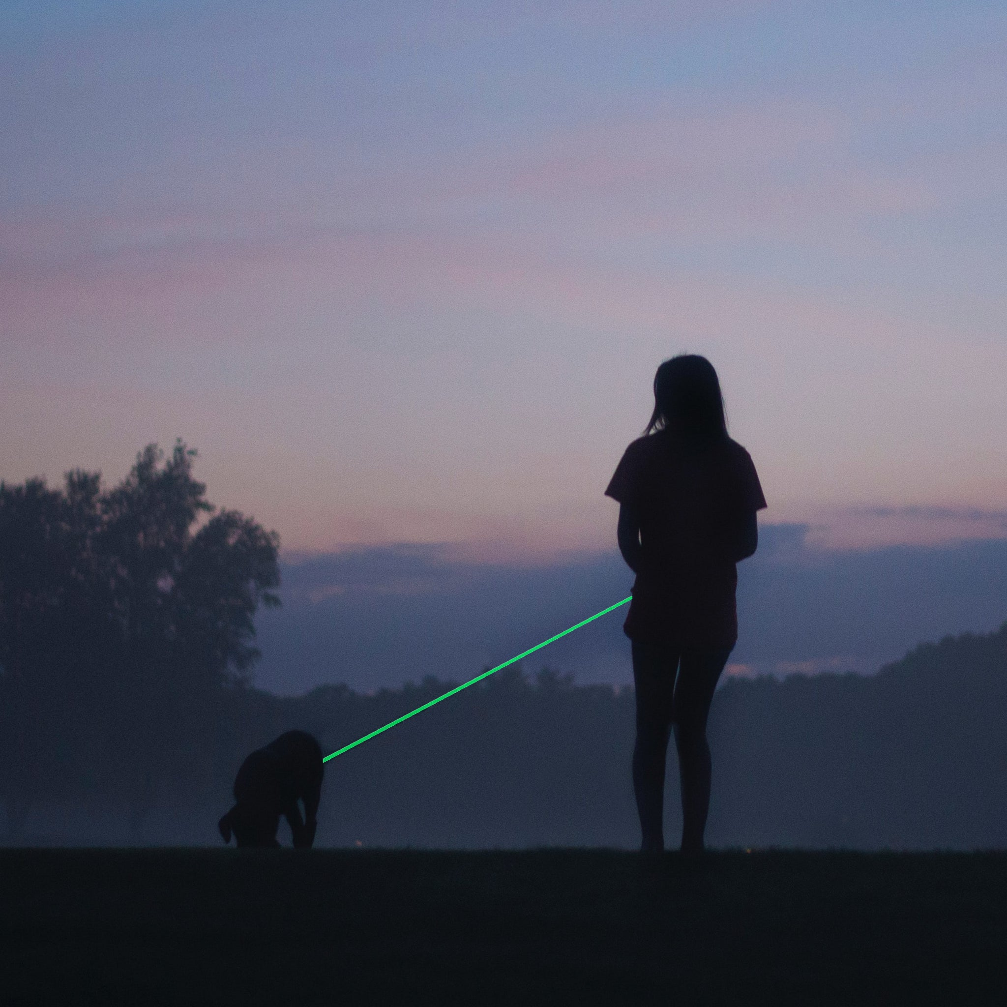 Glow in the Dark Pet Dog Leash Reflective