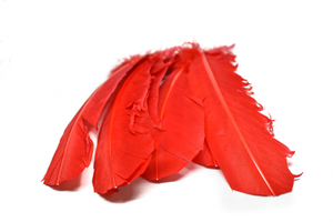 "Red Feather Pieces 11.5"" x 2.5"" - 1 Piece"