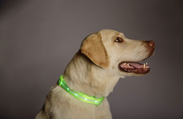 LED Light up Dog Pet Night Safety Bright Flashing Nylon Leash Harness Collar