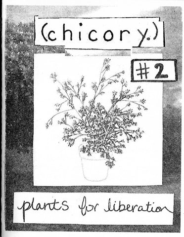 Chicory #2 Plants for Liberation