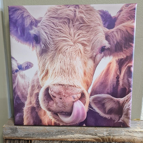 Give Me A Kiss - Calf on Canvas