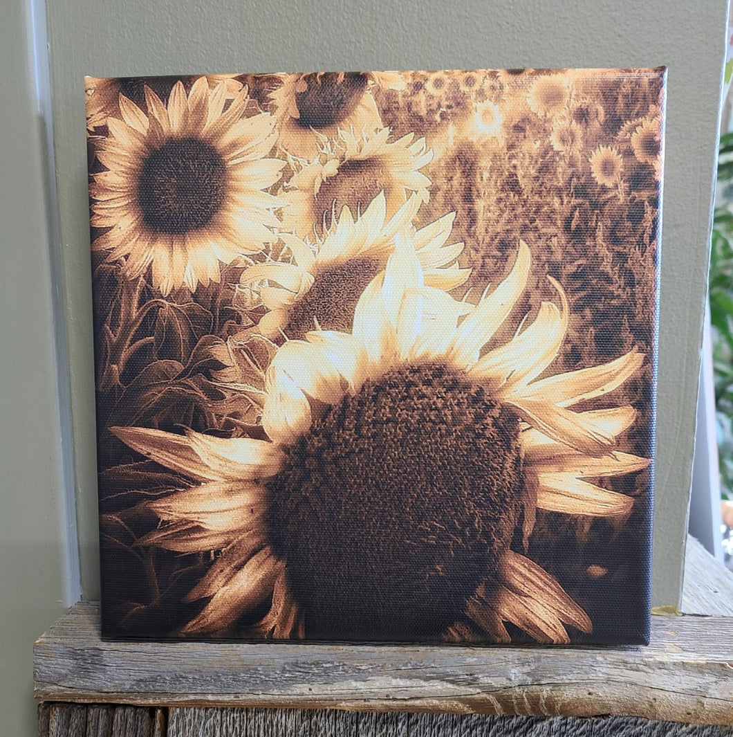 Golden Sunflowers Photo Canvas