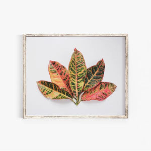 New Nature Photography Print: Leaf Fan, Dahlias + Peonies