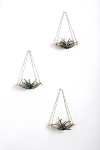 Air Plant Wall Holder Curved Shelf