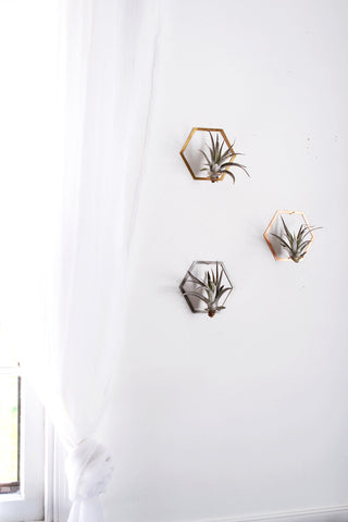 Hexagon Frame Air Plant Wall Holder | Air Plant Holder | Air Plant Hanger | Air Plant Planter | Airplant Holder | Airplant Hanger | Display