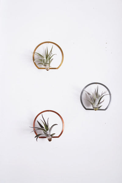 Arch Frame Air Plant Wall Holder | Air Plant Holder | Air Plant Hanger | Air Plant Planter | Airplant Holder | Airplant Hanger | Display