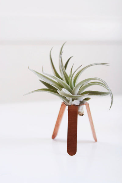 Tripod Air Plant Holder
