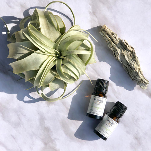 gracefultouch - Eucalyptus Globulus Leaf  Essential Oil - GracefulTouch  - Essential Oils