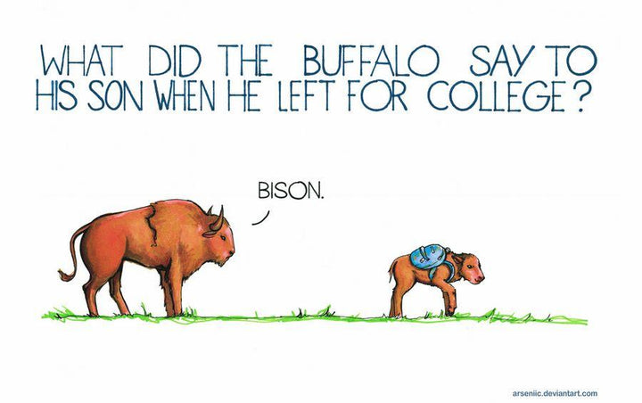 15 Animal Jokes to Bright your Day