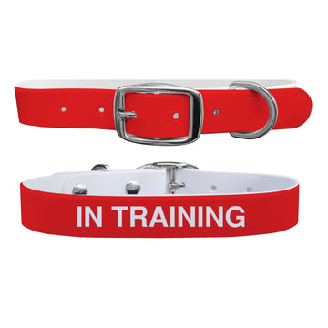 In Training Dog Collar Dog Collar C4 BELTS