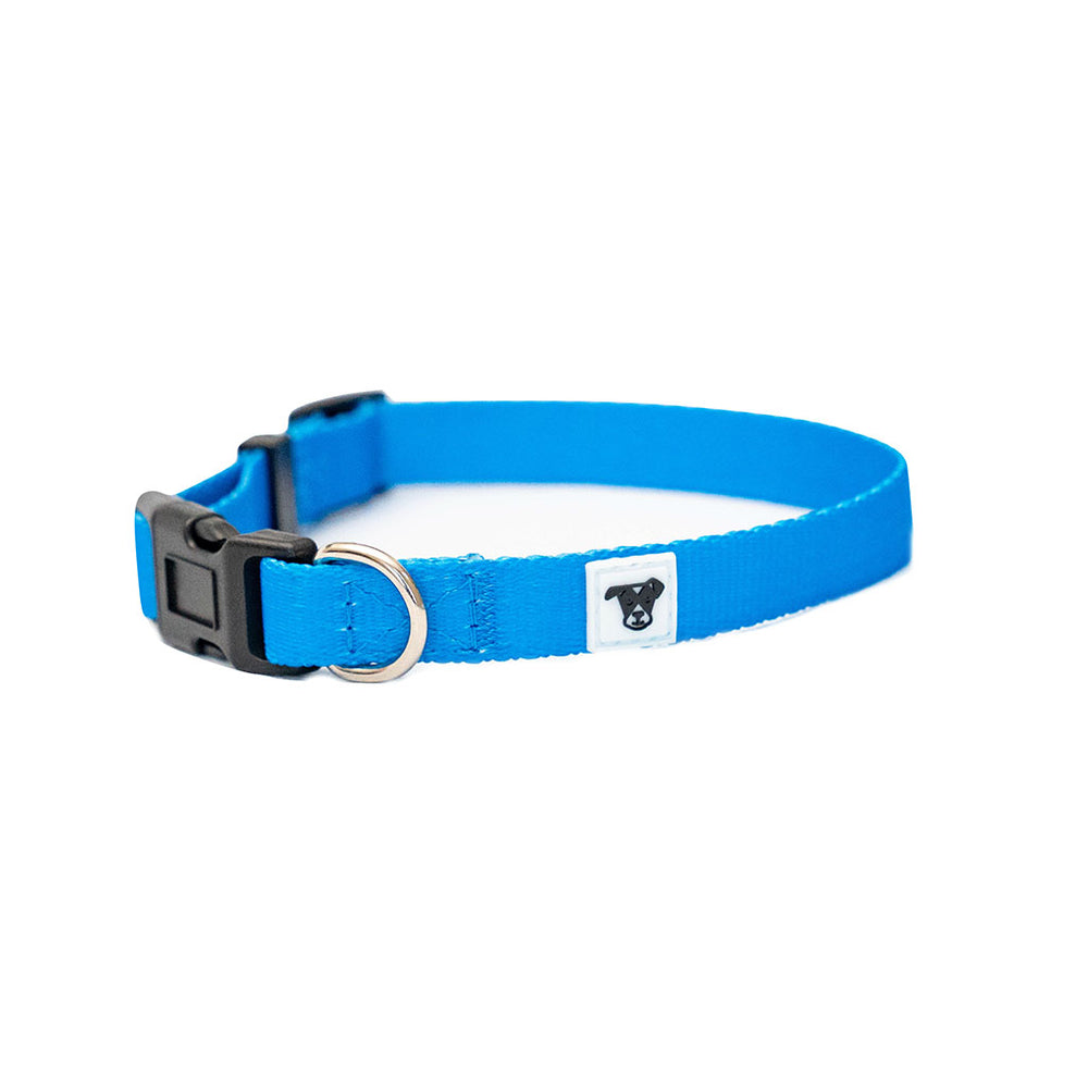 Classic Dogist Collar | Small