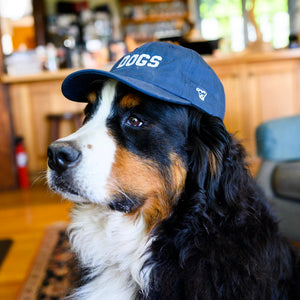 Flat Brim Dogist Hat | DOGS
