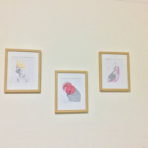 Sweet Gatherings set of 3x - collection of Australian birds