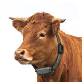 LoRaWAN GPS Cattle Tracker