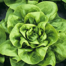 Load image into Gallery viewer, H2O Farms - Living Butterhead Lettuce - Neighbor to Neighbor Donation