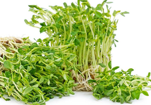 Highridge Hydroponics - Pea Shoot Micro Greens