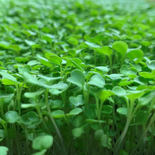 Load image into Gallery viewer, Hydrofresh Hydroponics - Arugula Micro Greens
