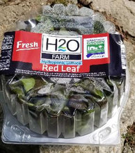 Load image into Gallery viewer, H2O Farms - Living Red Leaf Lettuce - Neighbor To Neighbor Donation
