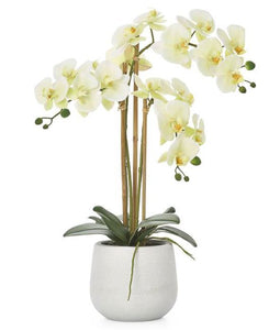 Potted Faux Orchids - Yellow (3 Sizes) - NicheDecor