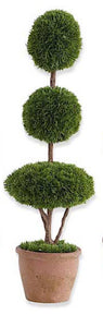 Topiary Tree Cypress #5