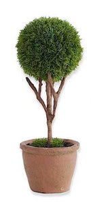 Topiary Tree Cypress #1