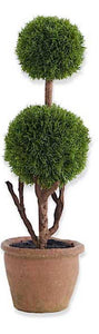 Topiary Tree Cypress #3