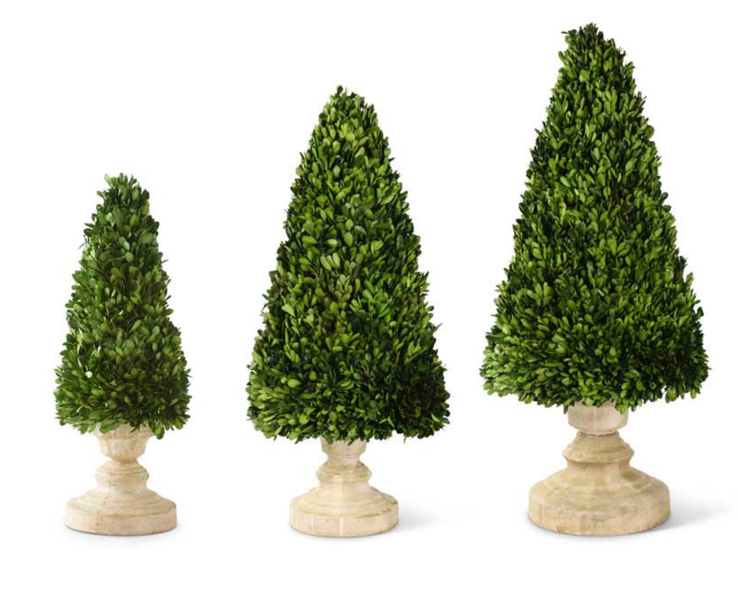 Topiary Boxwood Cone In Urn Large