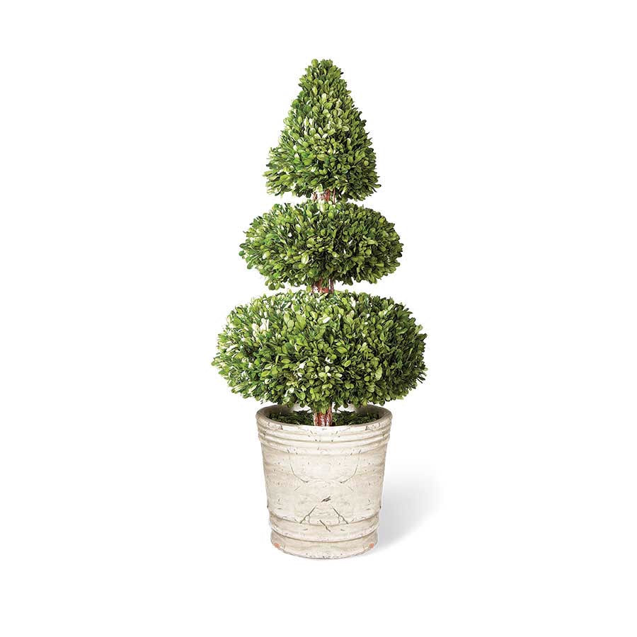 Topiary Boxwood Cone Top Double Orb In Pot 27.5""