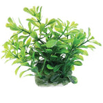underwater-treasures-green-moneywort-plant-2-5-inch