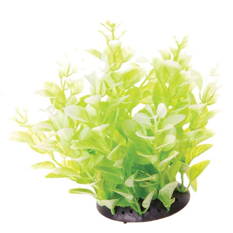 underwater-treasures-white-tipped-cardamine-plant-6-inch