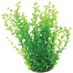 underwater-treasures-green-moneywort-plant-10-inch