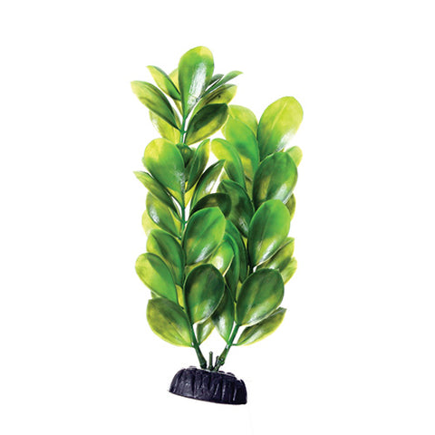 underwater-treasures-green-bacopa-plant-8-inch