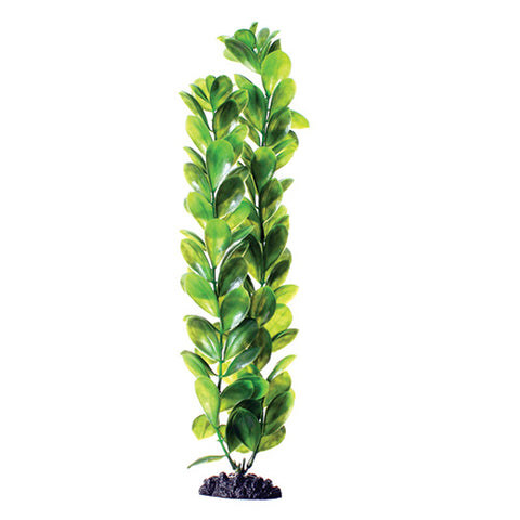 underwater-treasures-green-bacopa-plant-16-inch