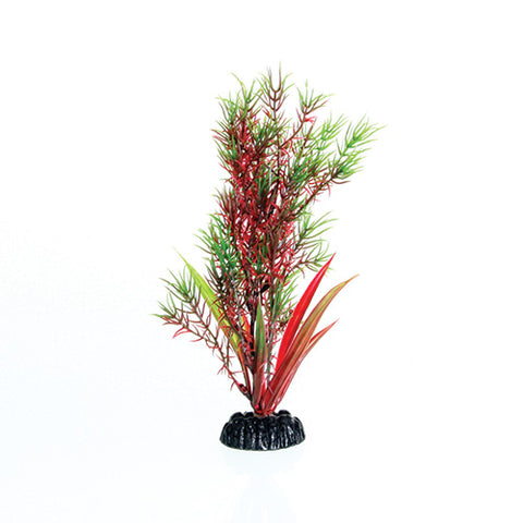 underwater-treasures-red-green-springeri-plant-8-inch