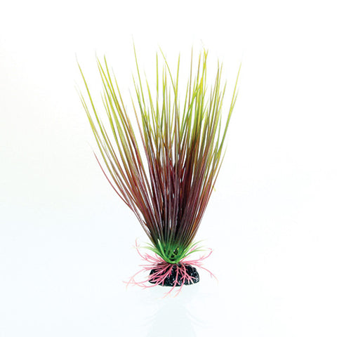 underwater-treasures-red-green-hairgrass-plant-8-inch