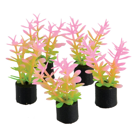 underwater-treasures-mini-plant-pink-green-1-5-inch-5-pack