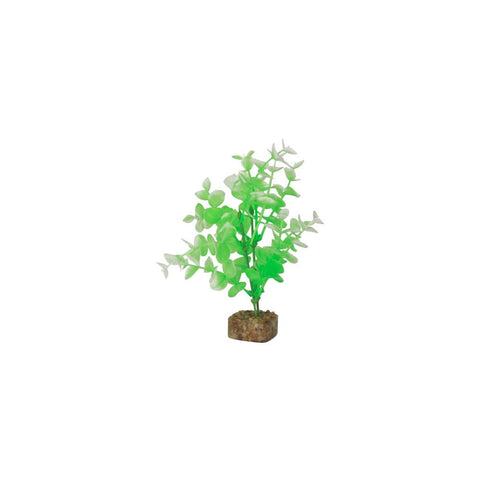 tetra-glofish-plant-green-white-medium