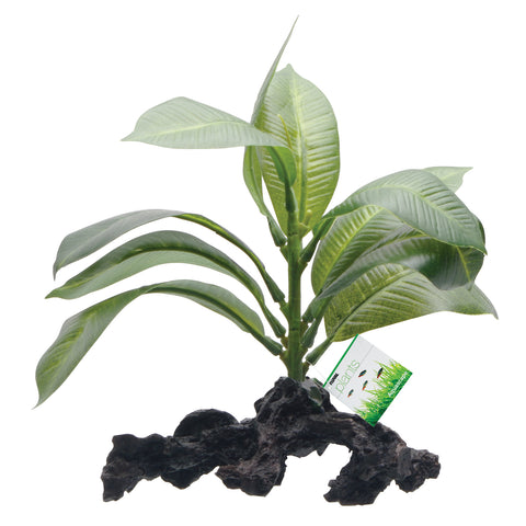 fluval-stemped-anubias-root-7-inch