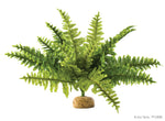 exo-terra-boston-fern-medium
