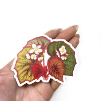 Begonia Vinyl Decal - Plant Stickers