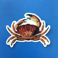 Vintage Florida Vinyl Stickers - Waterproof Crab Beach Stickers - Pergamo Paper Goods - Vintage Inspired Collage Art for Animal Lovers