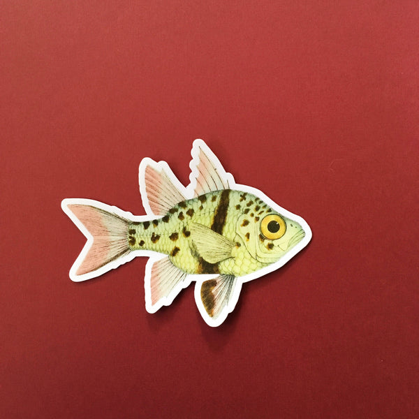 Vintage Image Vinyl Stickers for Laptops + More - Spotted Fish Sticker www.pergamopapergoods.com