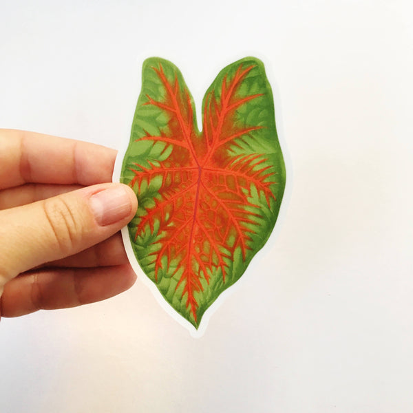 Tropical Leaf Sticker - Caladium Vinyl Sticker www.pergamopapergoods.com