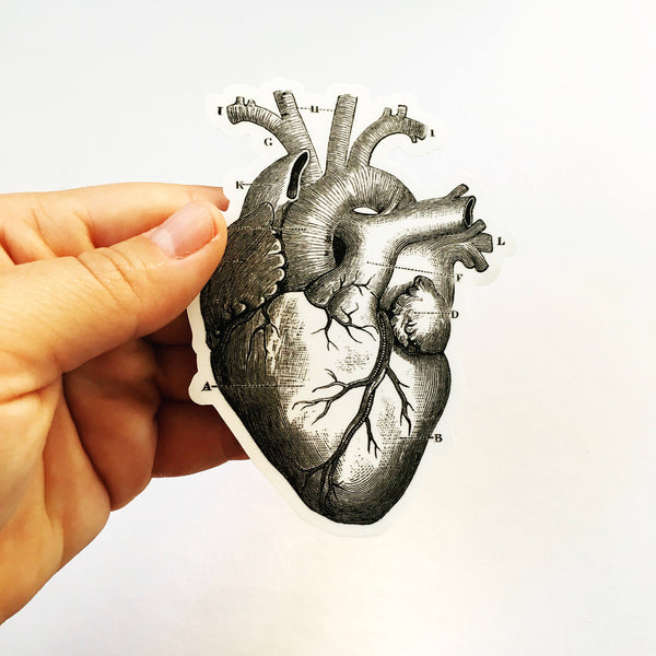 Vinyl laptop sticker, anatomical heart sticker, black and white heart sticker, Grays Anatomy sticker, Illustrated heart sticker