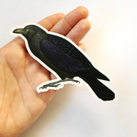 Antique Raven Sticker being held