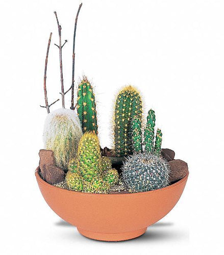Potted Cactus Garden - Floral Arrangement