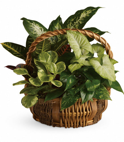 Emerald Garden Basket - Floral Arrangement
