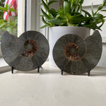 Load image into Gallery viewer, Polished Ammonite Fossil Pair with Metal Stands